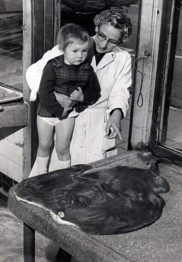 Fishmonger Showing 'Torpedo Fish' To Young Girl c.1966