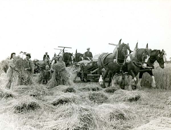 Harvest At East Craigs Farm c.1942