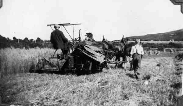 Harvesting The Corn 1938