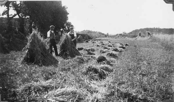 Gathering Sheaves Into Stooks 1938