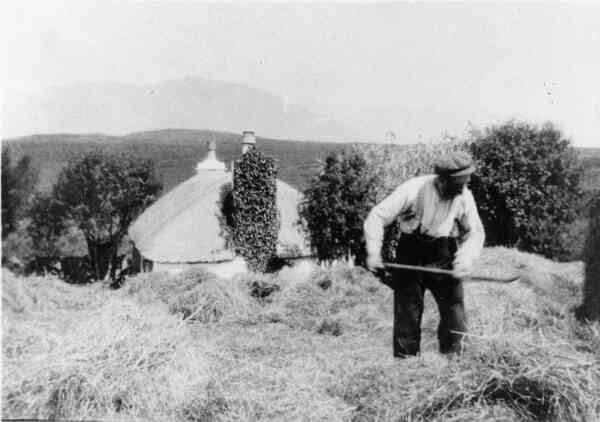 Forking Hay c.1930