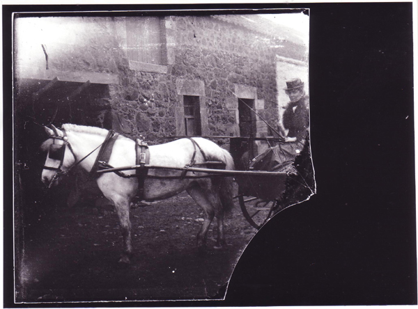 Woman Steering Pony And Trap c.1900