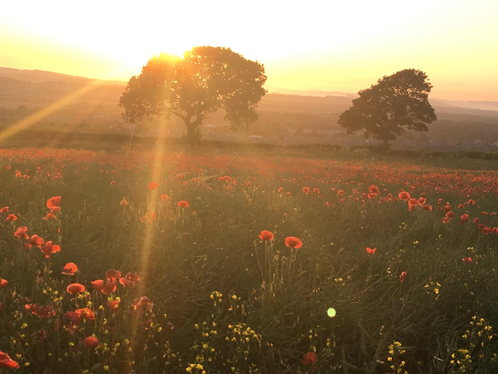 A poppy sunset