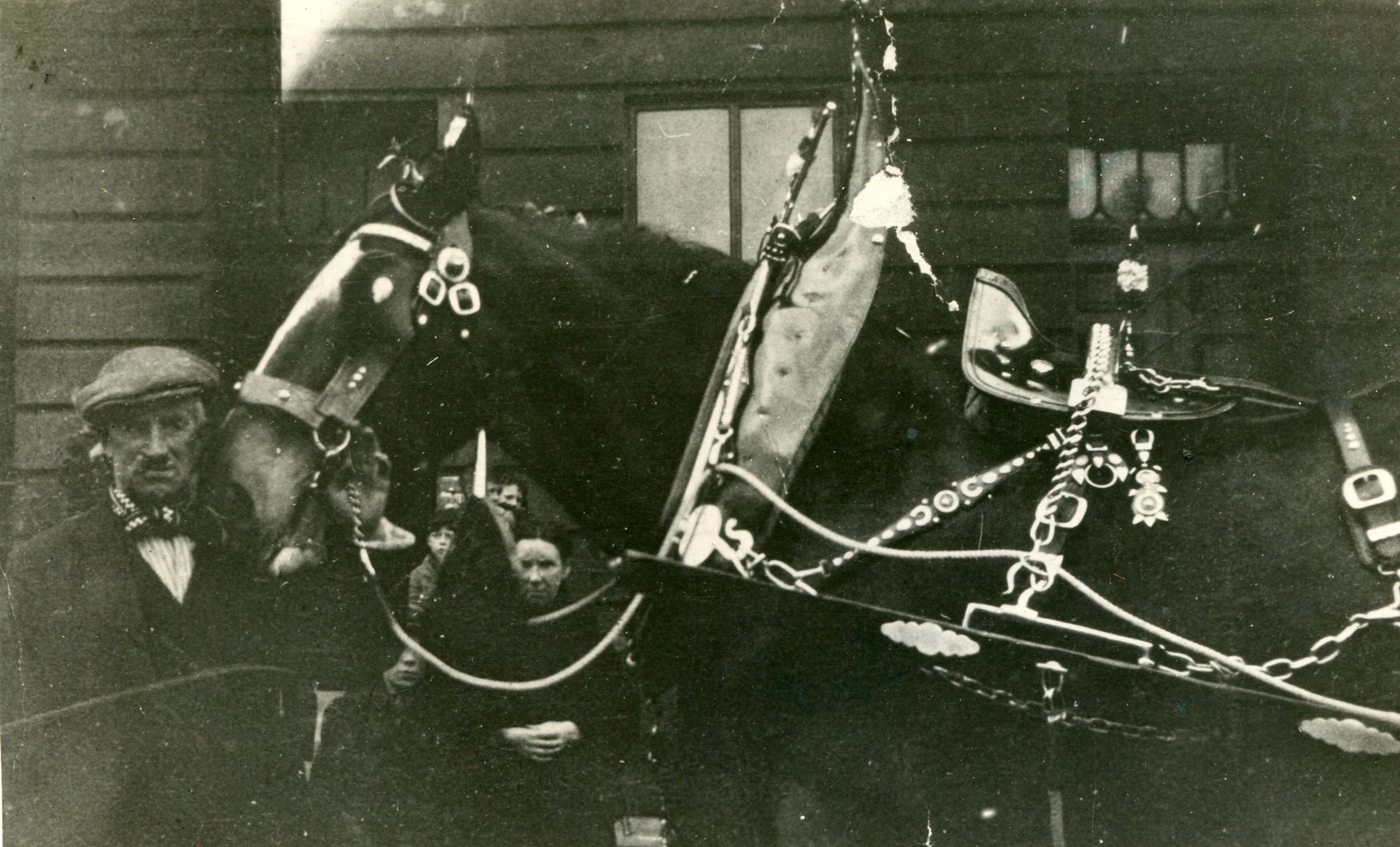 Cldesdale Horse With Handler On Day Of Leith Pageant Parade 1940s