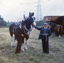 Clydesdale Horse With Handler At Leith Pageant Parade 1960s