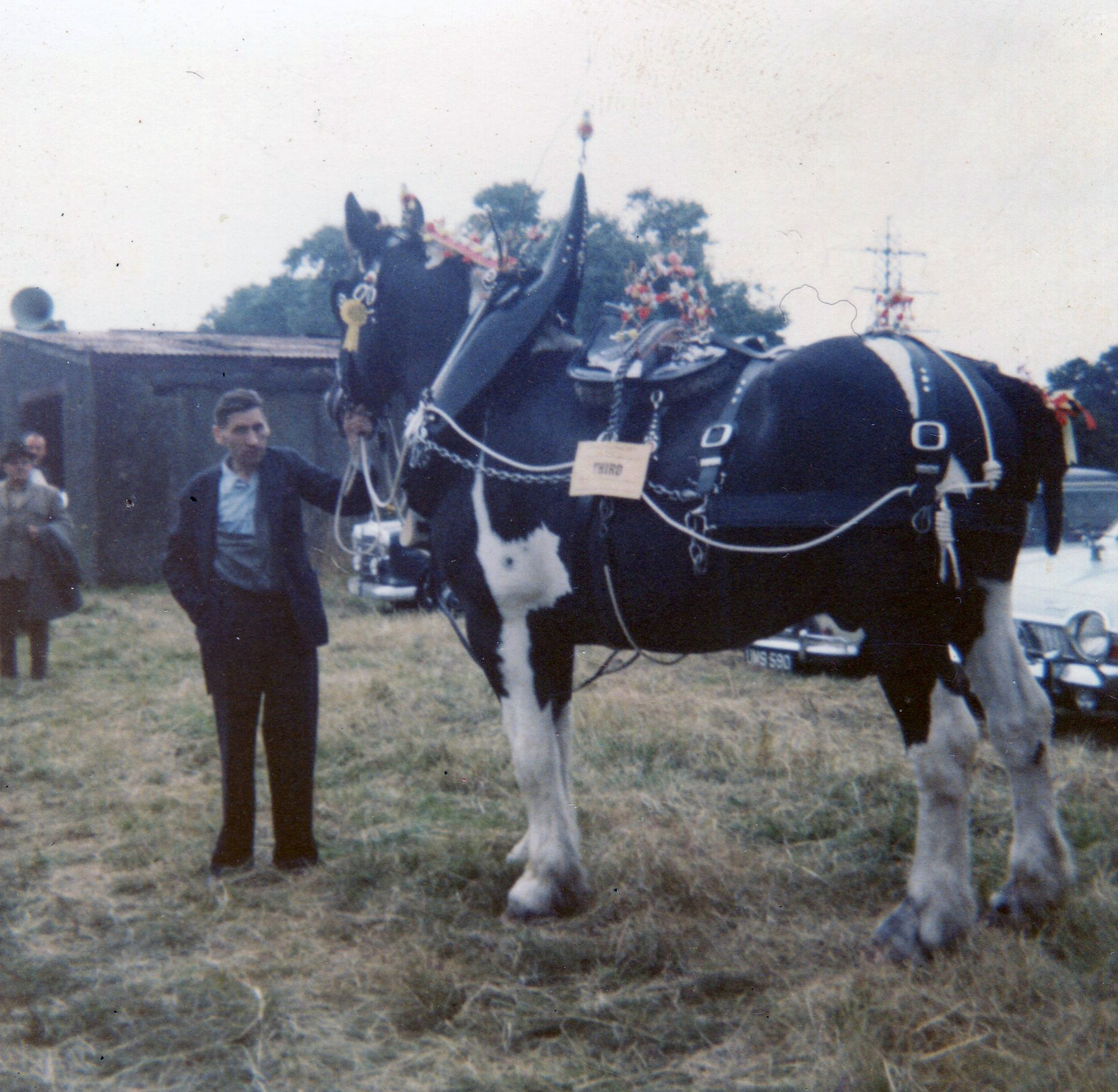Third Prize Clydesdale Horse With Handler At Leith Pageant Parade 1960s