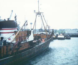 Devlin Steam Trawlers At Granton Harbour 1960s