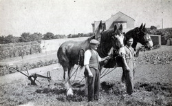 Men With Horses At Fillyside Market Gardens By Seafield Crematorium 1930s