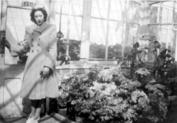 Young Woman Standing By Doorway In Glasshouse At Botanics, early 1950s