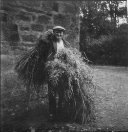 Farm Worker Carrying Bundles Of Straw, late 1940s