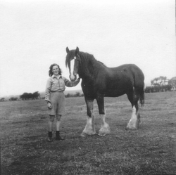 Young Woman With Clydesdale Horse, late 1940s