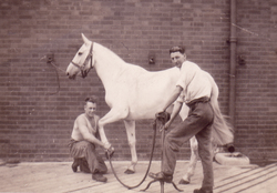 Two Men Dressing A Horse 1930s