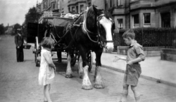 Children Feeding St Cuthberts Bakery Delivery Horse At Falcon Gardens c.1934