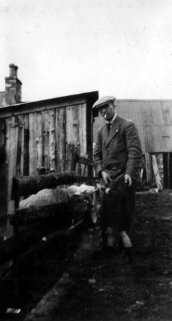 Man With Boy Feeding Sheep c.1930