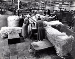 Feeding Sisal For Rope-Making Into Machine 1960s