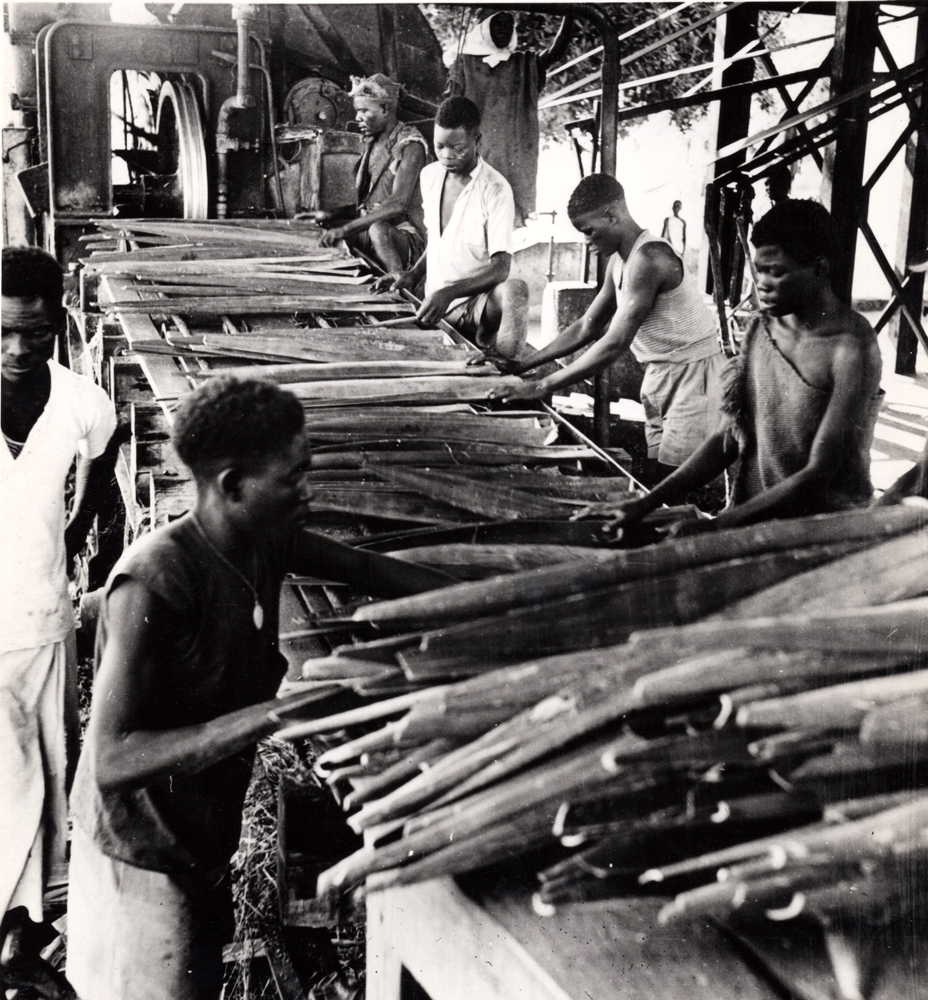 Sorting Sisal Leaves For Fabrication Of Rope, Twine, Cloth 1950s