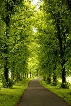 Green Inverleith Park